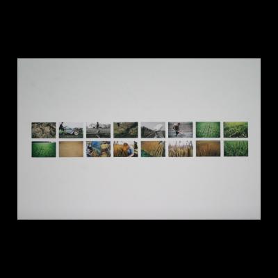 汪建伟,循环种植,1993-1994