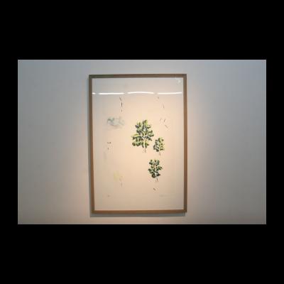 曾浩,白色背景的三棵树,2012