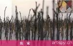"Boers-Li 画廊群展""线索""(视频)"