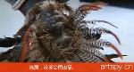 徐震:没顶公司出品(视频)